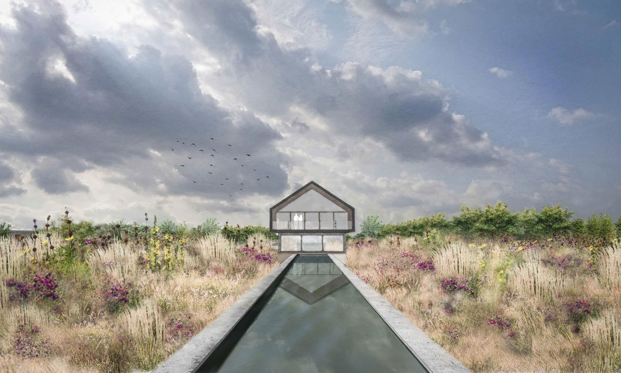 Colm Joseph Gardens- Field Barn Suffolk modern architecture garden design swimming pool naturalistic planting